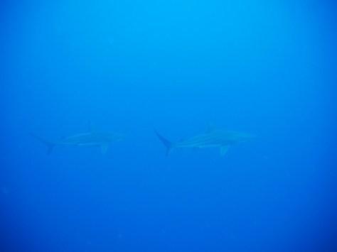6月22日サメからナイトダイブまで(^^♪_c0070933_00035272.jpg