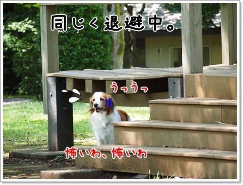 d0013149_00310514.jpg