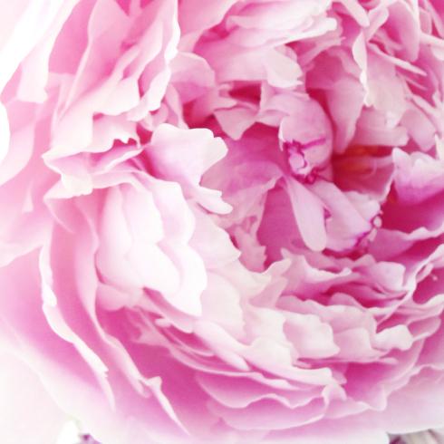 本日のインスタグラムとちいさな花の教室のおおきなご縁 東京目黒不動前フラワースタジオフローラフローラ*フラワースクール_a0115684_19155983.jpg