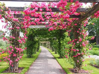 Kew Gardensのバラのアーチ_f0238789_21494952.jpg