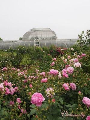 Kew Gardensのバラのアーチ_f0238789_21574334.jpg