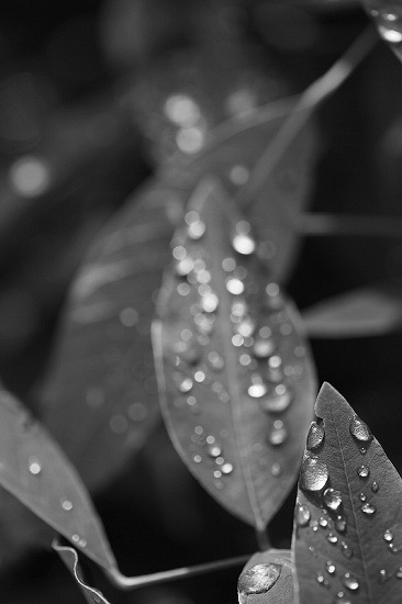 雨上りの向島百花園_e0348392_18261935.jpg