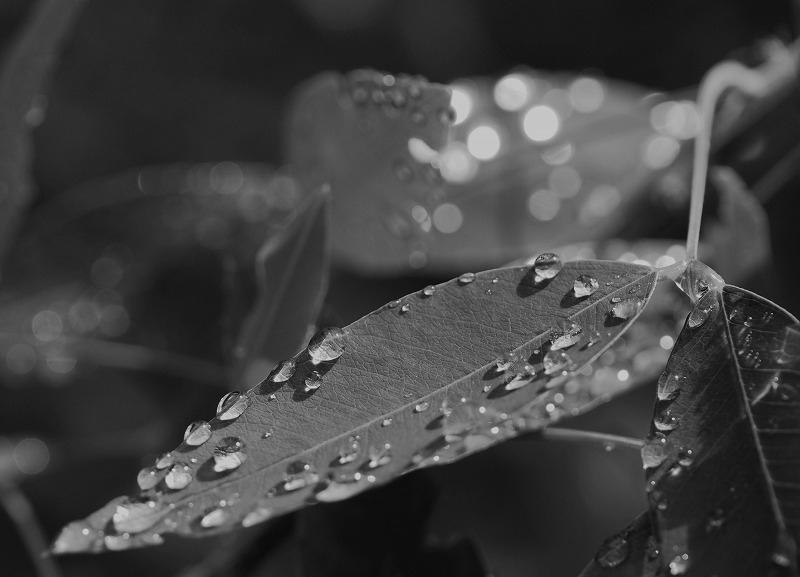 雨上りの向島百花園_e0348392_18263553.jpg