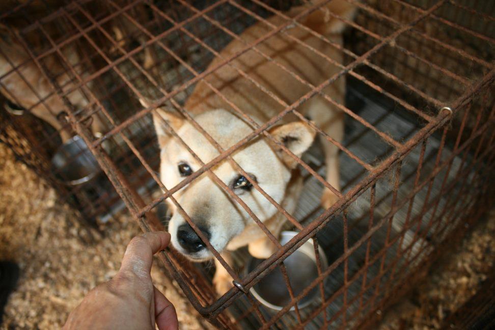 ブリーダー放棄の柴犬とラブたち(7/2-7/3)_f0242002_0154587.jpg