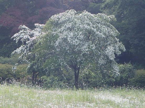 白い花_f0064906_16475431.jpg