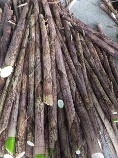美味しい竹の子の秘密_f0238106_1742367.jpg