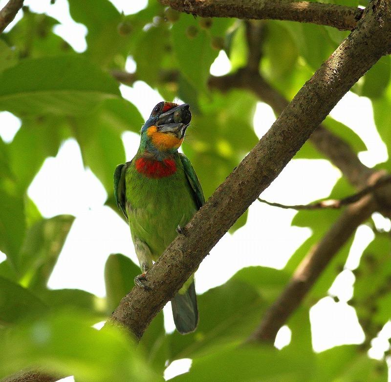 台湾鳥見旅行(その2)・・・_c0213607_18260278.jpg