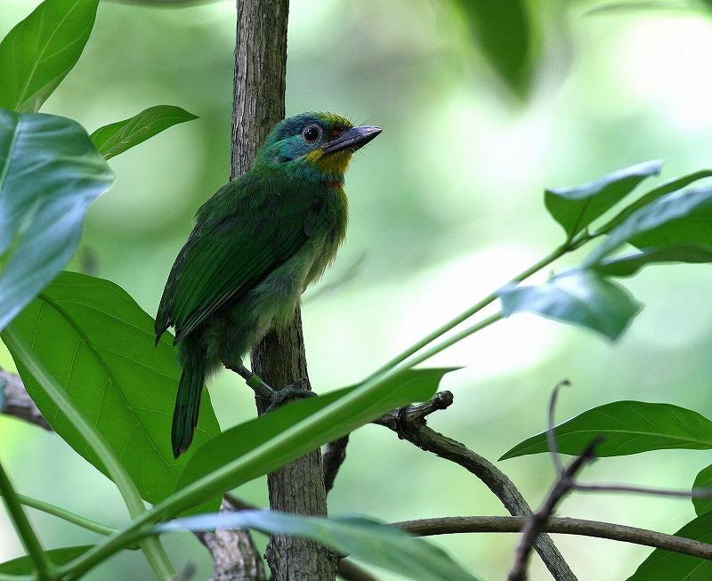台湾鳥見旅行(その2)・・・_c0213607_18263547.jpg