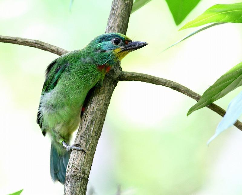 台湾鳥見旅行(その2)・・・_c0213607_18264046.jpg