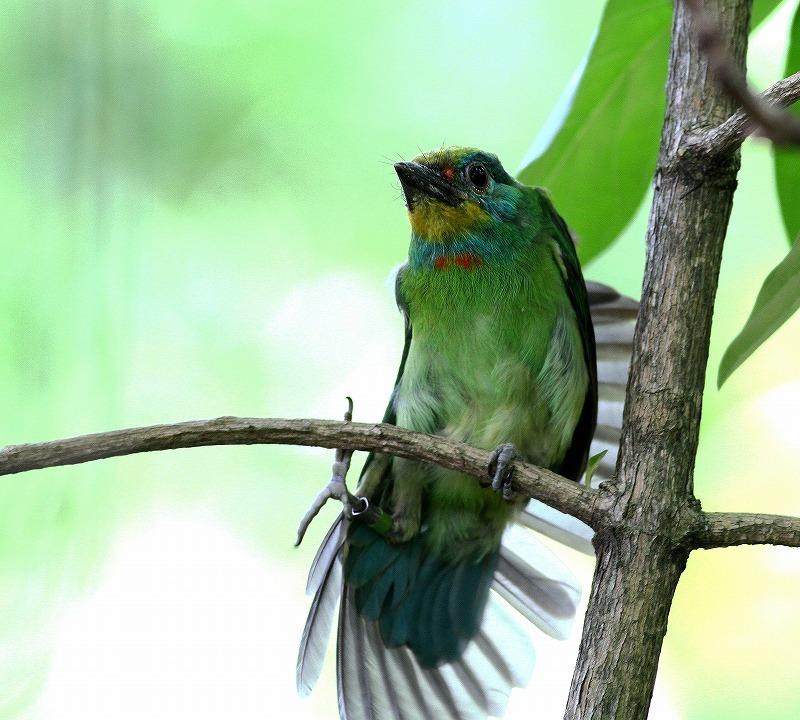 台湾鳥見旅行(その2)・・・_c0213607_18264940.jpg