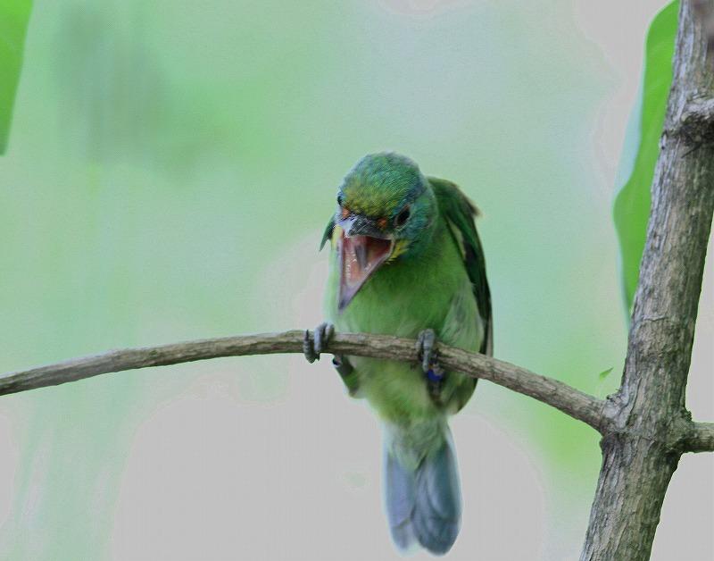 台湾鳥見旅行(その2)・・・_c0213607_18271564.jpg