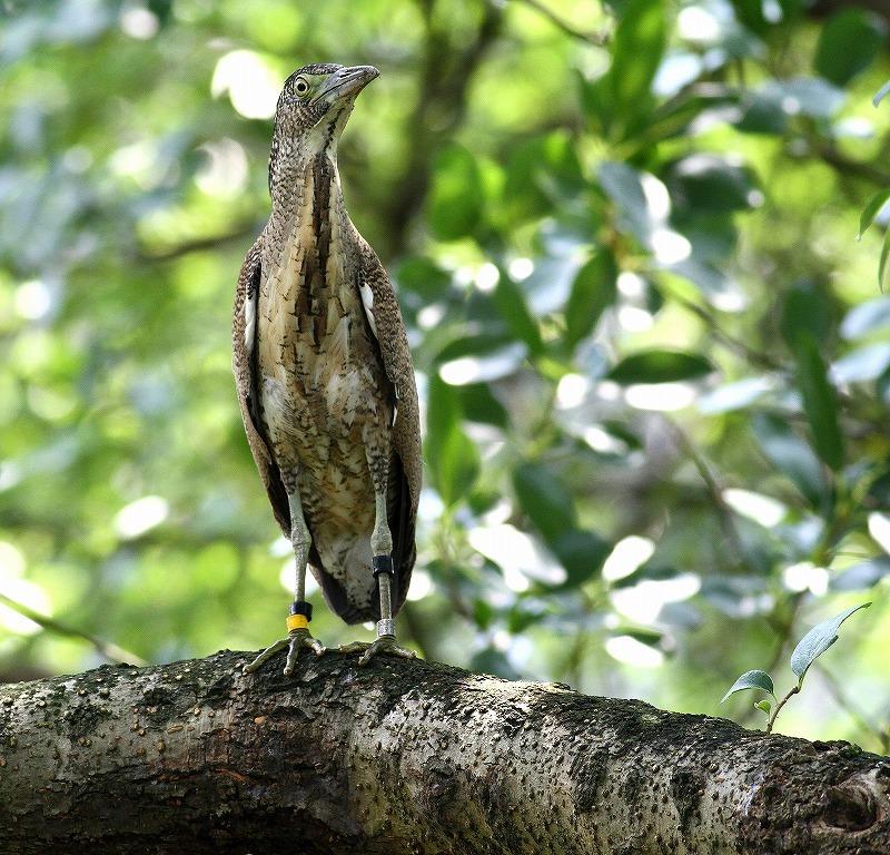 台湾鳥見旅行(その2)・・・_c0213607_18305158.jpg