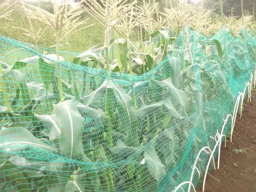 トウモロコシの初収穫.._b0137932_15225739.jpg
