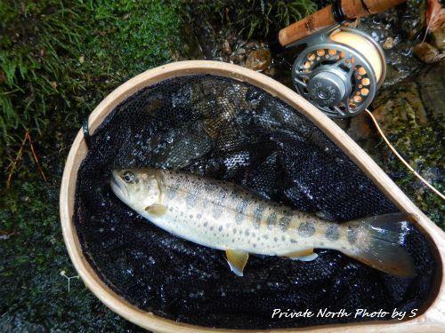 昨日の釣り_d0261148_20432833.jpg