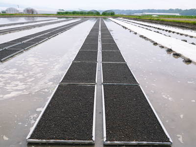 七城米 長尾農園 苗箱作り~美しすぎる苗床 惜しまぬ手間ひまで至高のお米を育てます(前編)_a0254656_16581867.jpg