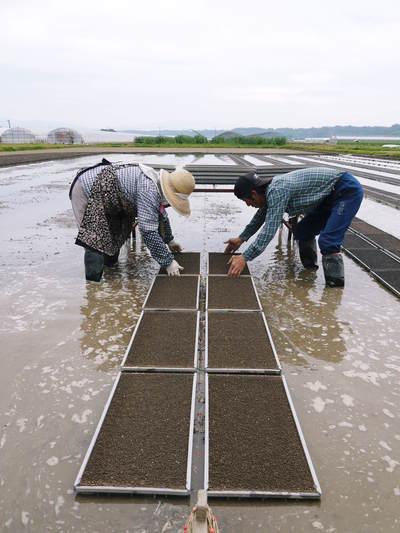 七城米 長尾農園 苗箱作り~美しすぎる苗床 惜しまぬ手間ひまで至高のお米を育てます(前編)_a0254656_1714414.jpg