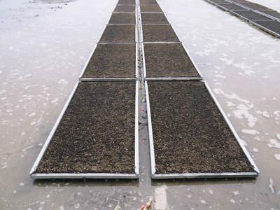 七城米 長尾農園 苗箱作り~美しすぎる苗床 惜しまぬ手間ひまで至高のお米を育てます(前編)_a0254656_17174544.jpg