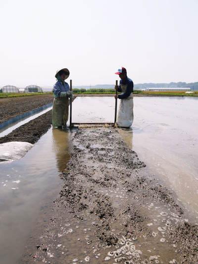 七城米 長尾農園 苗箱作り~美しすぎる苗床 惜しまぬ手間ひまで至高のお米を育てます(前編)_a0254656_17212720.jpg