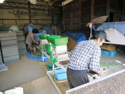 七城米 長尾農園 苗箱作り~美しすぎる苗床 惜しまぬ手間ひまで至高のお米を育てます(前編)_a0254656_17354916.jpg