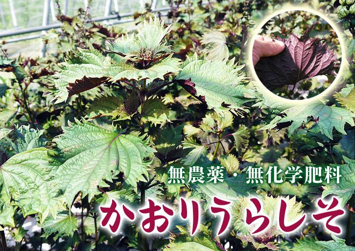 七城米 長尾農園 苗箱作り~美しすぎる苗床 惜しまぬ手間ひまで至高のお米を育てます(前編)_a0254656_18181255.jpg