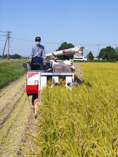 七城米 長尾農園 苗箱作り~美しすぎる苗床 惜しまぬ手間ひまで至高のお米を育てます(前編)_a0254656_18265754.jpg