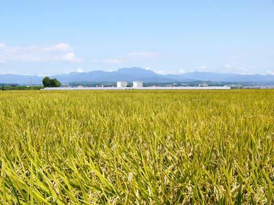 七城米 長尾農園 苗箱作り~美しすぎる苗床 惜しまぬ手間ひまで至高のお米を育てます(前編)_a0254656_1832547.jpg