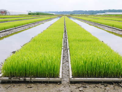 七城米 長尾農園 苗箱作り~美しすぎる苗床 惜しまぬ手間ひまで至高のお米を育てます(前編)_a0254656_18352458.jpg