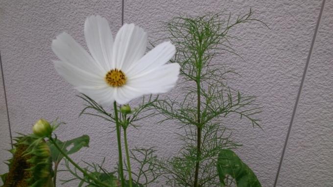 今日の花。_d0116059_14420497.jpg