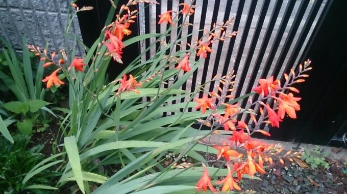 今日の花。_d0116059_14420754.jpg