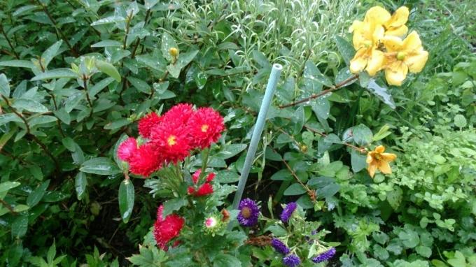 今日の花。_d0116059_14421175.jpg