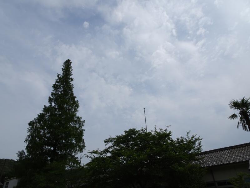 孝子の森にコクランが咲いた_c0108460_16315358.jpg