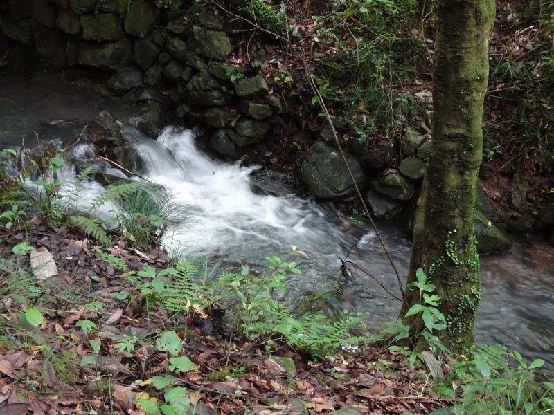 孝子の森にコクランが咲いた_c0108460_16315757.jpg