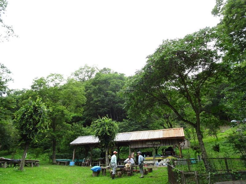 孝子の森にコクランが咲いた_c0108460_16332168.jpg