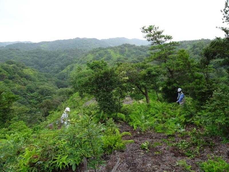 孝子の森にコクランが咲いた_c0108460_16395639.jpg