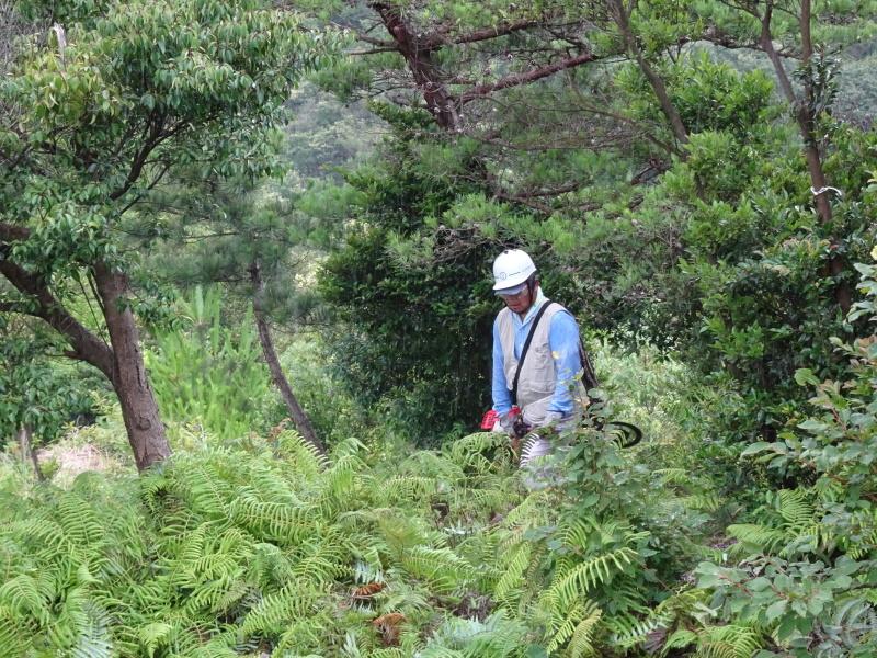 孝子の森にコクランが咲いた_c0108460_16395821.jpg