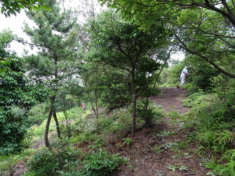 孝子の森にコクランが咲いた  by  (TATE-misaki)_c0108460_16415922.jpg