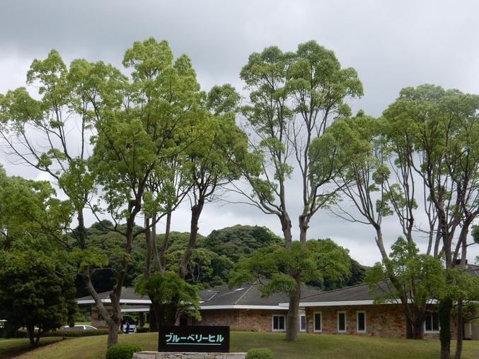 '16,6,24(金)わぁ~!謎だらけの木ばかり!_f0060461_16224693.jpg