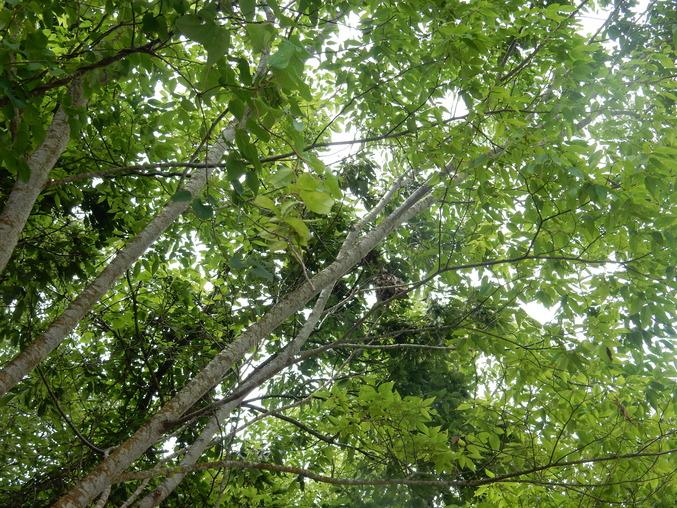 '16,6,24(金)わぁ~!謎だらけの木ばかり!_f0060461_162612100.jpg