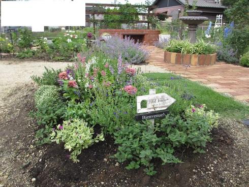 花壇の植え替え「夏~秋まで」たのしめるように_a0243064_8392947.jpg
