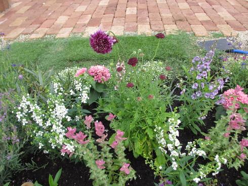 花壇の植え替え「夏~秋まで」たのしめるように_a0243064_8463851.jpg