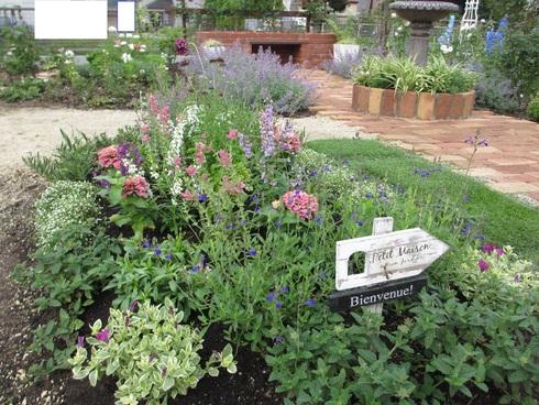 花壇の植え替え「夏~秋まで」たのしめるように_a0243064_8474617.jpg
