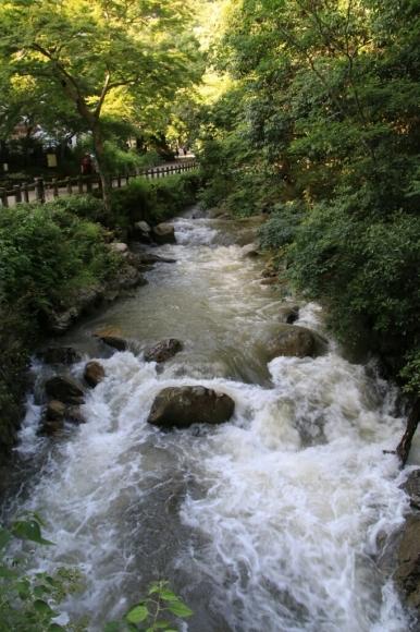 大雨の中で  箕面大滝_d0202264_14260365.jpg
