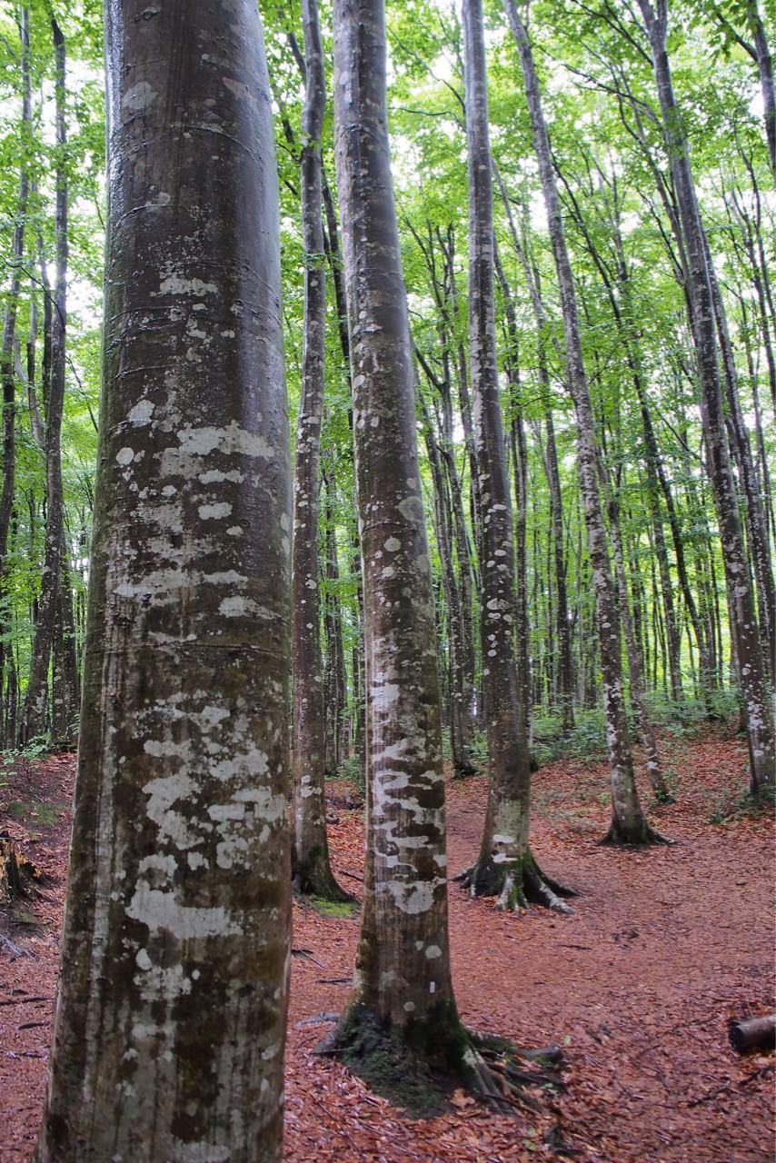雨のブナの森_a0025576_08155404.jpg