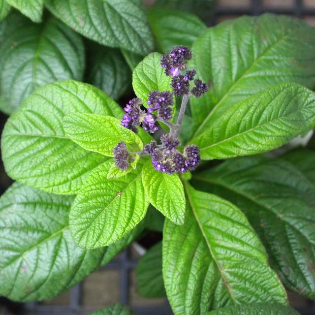 ブルー系のお花が入荷_a0292194_18565237.jpg