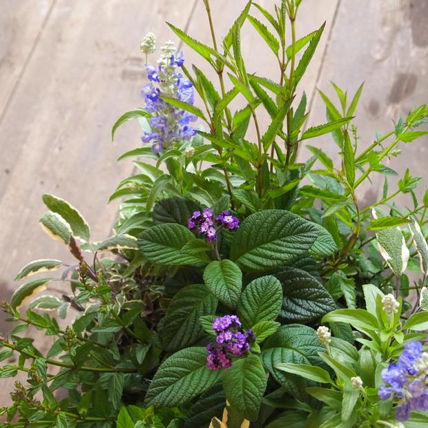 ブルー系のお花が入荷_a0292194_1904195.jpg