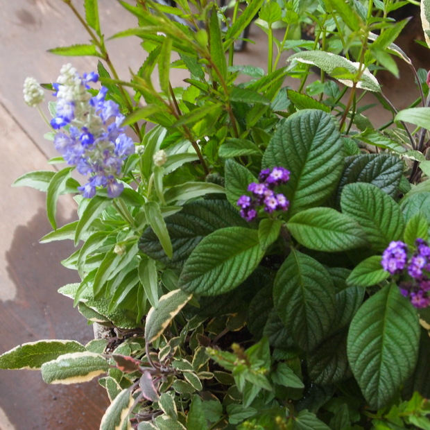 ブルー系のお花が入荷_a0292194_191238.jpg