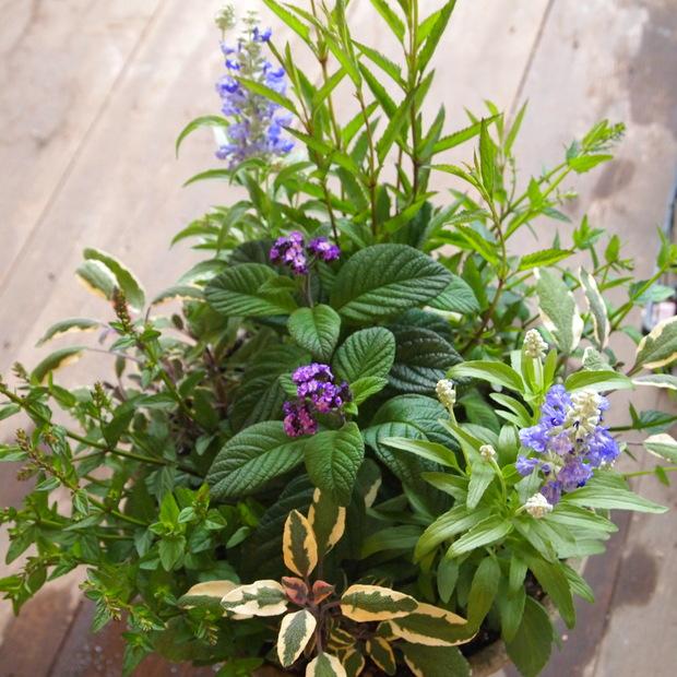 ハーブとお花の寄せ植え_a0292194_19131812.jpg