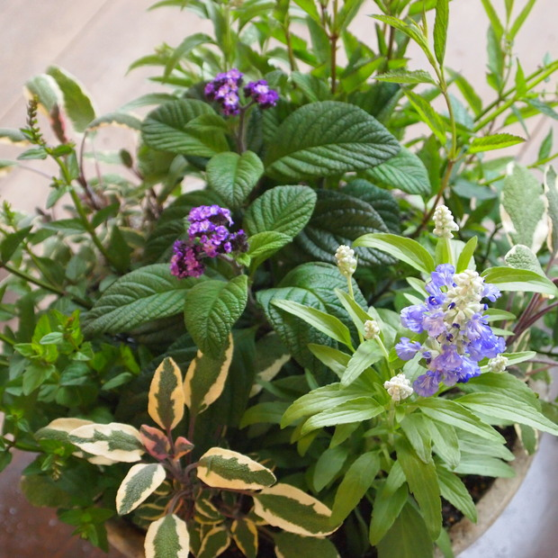 ハーブとお花の寄せ植え_a0292194_19133326.jpg
