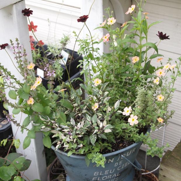 ハーブとお花の寄せ植え_a0292194_19175528.jpg