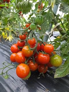 収穫とごはん_f0238106_1164113.jpg